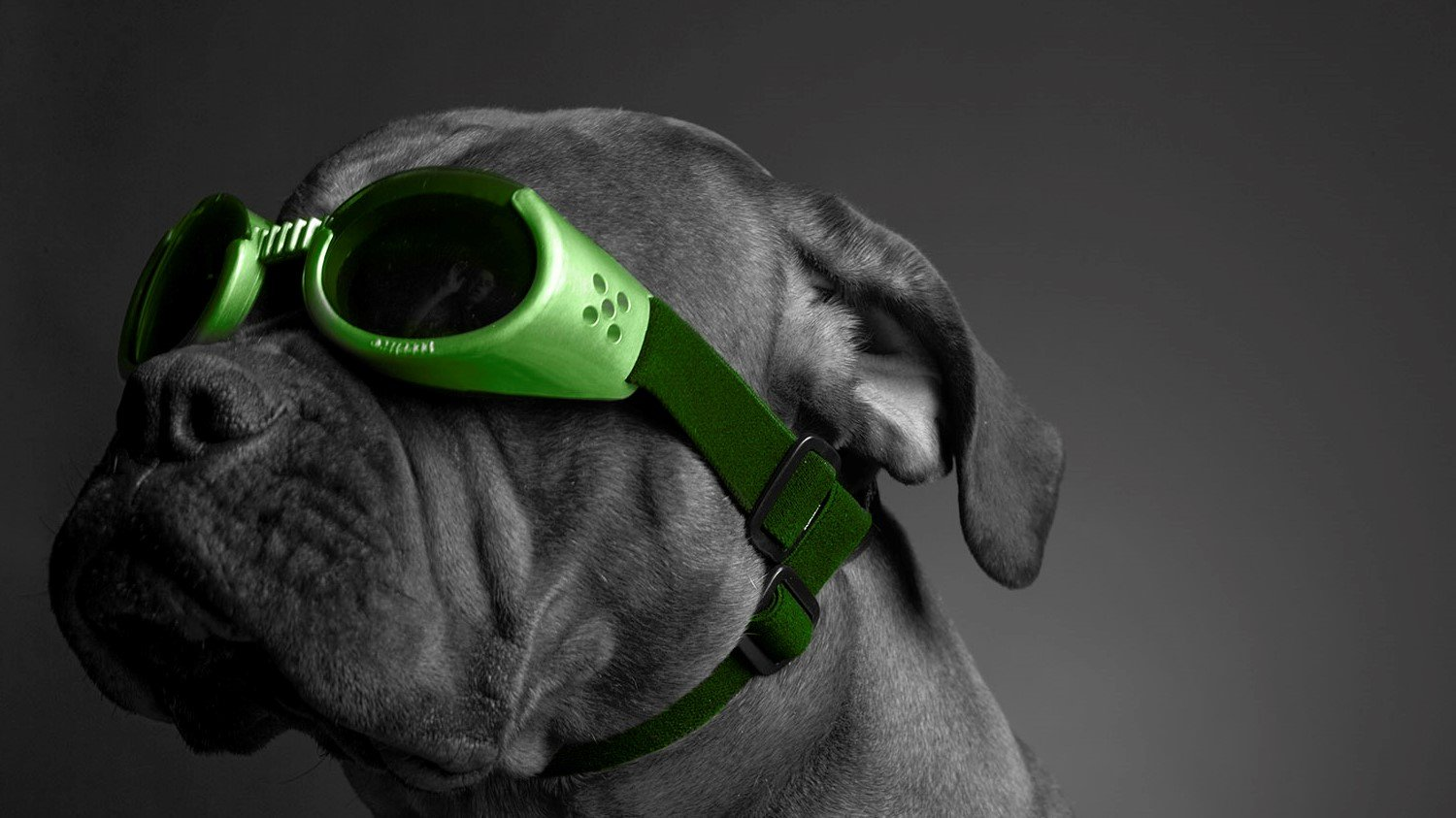 Dog-Goggles Pic widescreen
