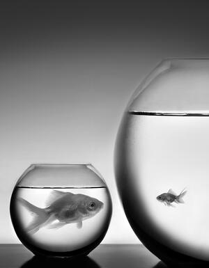 Fish-Bowl-Big-Small_GI-656402474-BW-MD